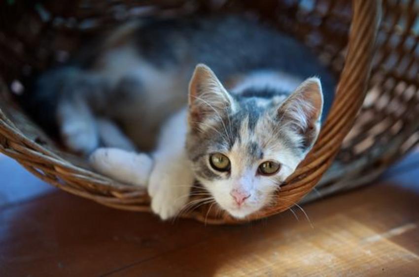 Γάτα πλύθηκε στους 60 βαθμούς στο πλυντήριο και επέζησε