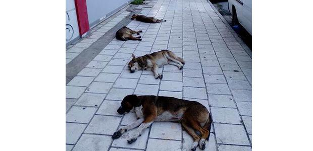 Τα …νεκρά σκυλιά, κοιμόντουσαν