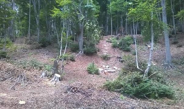Παράνομη υλοτόμηση σε δάσος Natura στο Πήλιο
