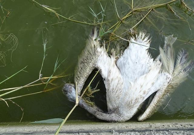 Σύσκεψη στην Περιφέρεια για τα νεκρά πουλιά στην Κάρλα