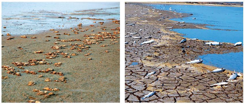 Οικολογική καταστροφή και στη λίμνη Αλυκή από διάνοιξη καναλιού