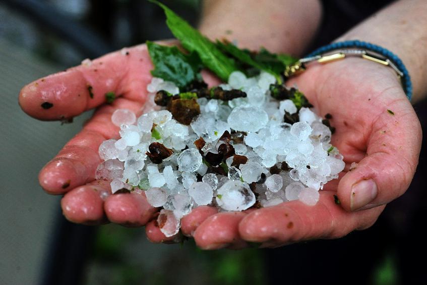 Καταστροφές καλλιεργειών στα Τρίκαλα από τη χαλαζόπτωση