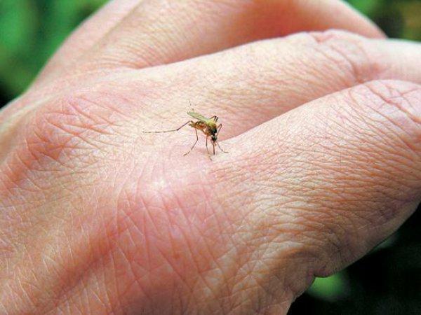 Μέτρα πρόληψης για μετάδοση ελονοσίας σε χώρους εργασίας