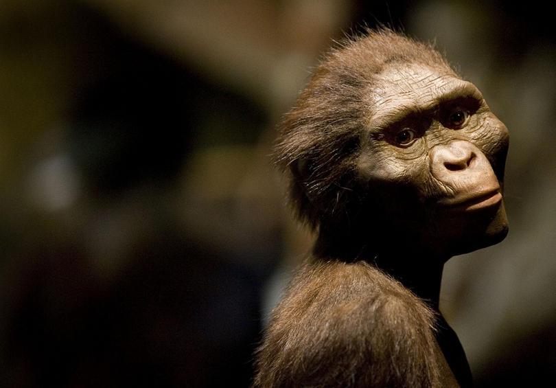 Οδυνηρό τέλος για τον διασημότερο αυστραλοπίθηκο της Αφρικής διαπιστώνουν επιστήμονες