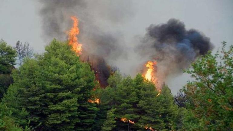 Πυρκαγιά στο Καστρί της Εύβοιας