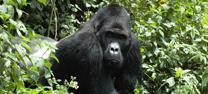 Τα είδη ζώων που απειλούνται με εξαφάνιση