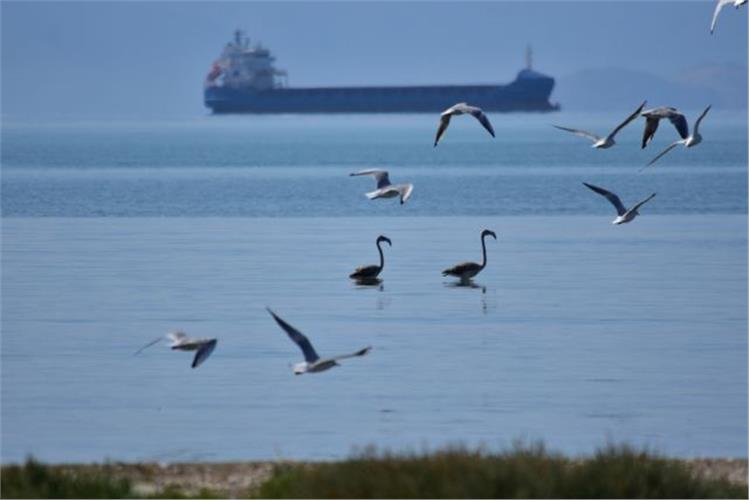 Φθινοπωρινή μετανάστευση πουλιών