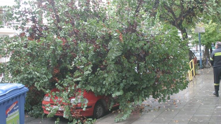 Δέντρο καταπλάκωσε αυτοκίνητο στη Λάρισα