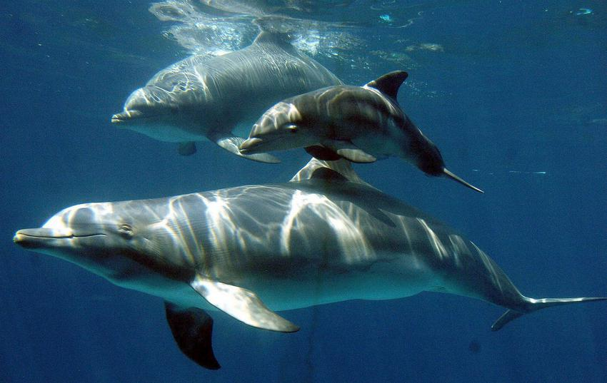 Η πρώτη καταγραφή ενός διαλόγου μεταξύ δελφινιών είναι γεγονός