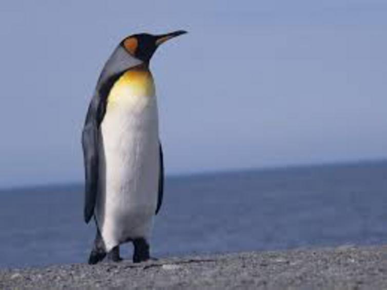 Διαμαρτυρόμενοι φοιτητές απήγαγαν πιγκουίνο