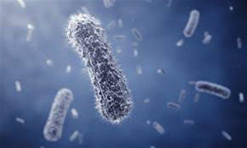Μικρόβια του στόματος ύποπτα για επιδείνωση του καρκίνου παχέος εντέρου