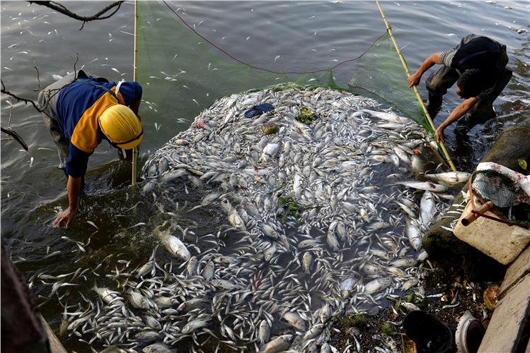 Βιετνάμ: Τόνοι νεκρών ψαριών στις ακτές