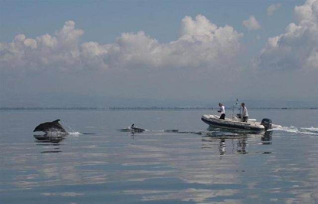Κρουαζιέρα γνωριμίας με τα προστατευόμενα ρινοδέλφινα στον Αμβρακικό Κόλπο