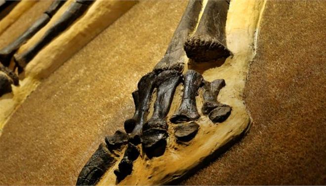 Ανακαλύφθηκε απολίθωμα γιγάντιας πατημασιάς δεινόσαυρου με μήκος πάνω από ένα μέτρο