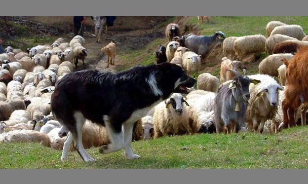 Ημερίδα για την κτηνοτροφία και συνάντηση κτηνοτρόφων στον Αλμυρό