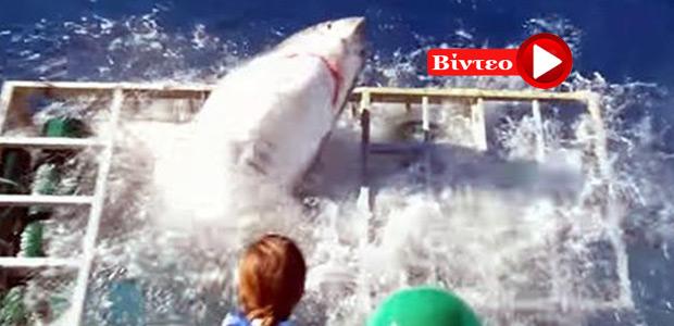 Τρόμος: Λευκός καρχαρίας εισβάλει στο προστατευτικό κλουβί με τον δύτη
