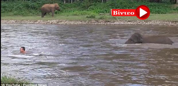 Ελέφαντας σώζει τον εκπαιδευτή του από πνιγμό