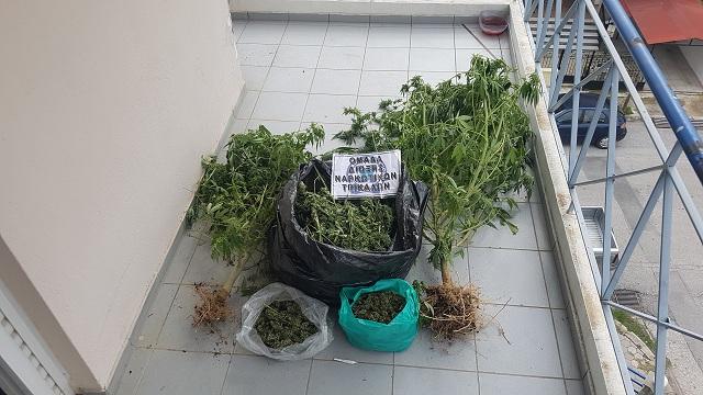 Καλλιεργούσε κάνναβη στα αγροκτήματά του