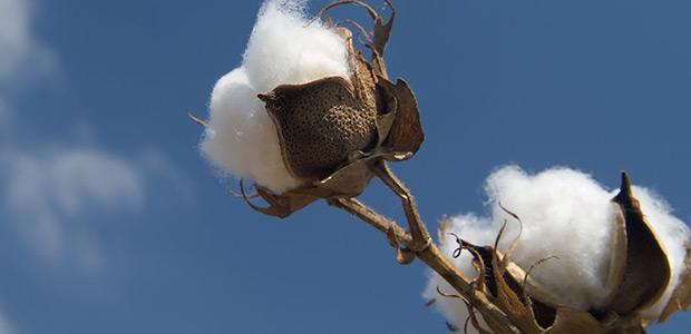 Μέτρα για την προστασία του βαμβακιού