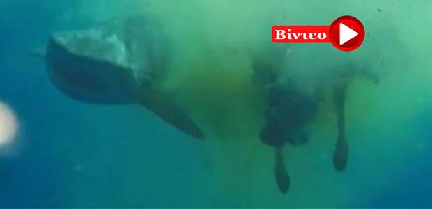 Καρχαρίας καταβρόχθισε αγελάδα στη μέση του Ινδικού ωκεανού