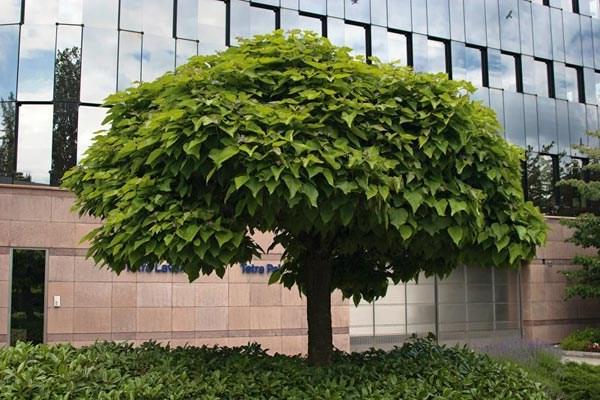 2.000 δένδρα και φυτά θα φυτευτούν στο Πανεπιστημιακό Νοσοκομείο Λάρισας