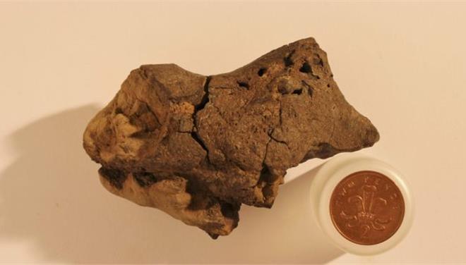 Εντόπισαν για πρώτη φορά απολιθωμένο εγκέφαλο δεινοσαύρου