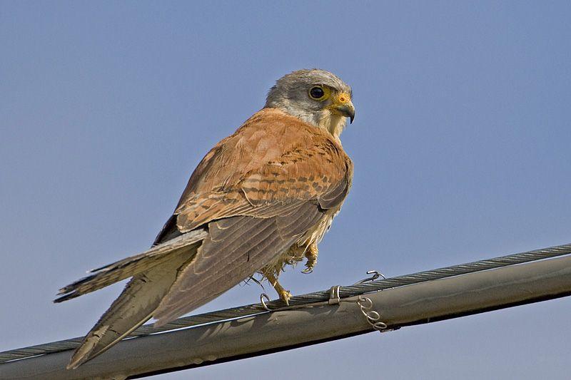 Προσπάθεια προστασίας σπάνιων πουλιών