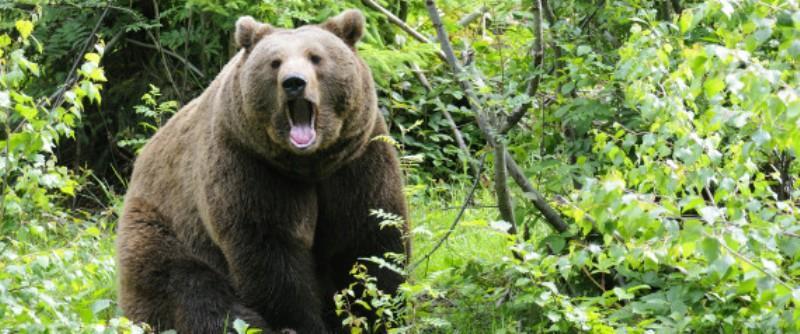 Κυνηγός δέχθηκε επίθεση από αρκούδα