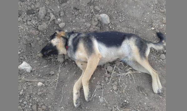Σκότωσαν με φόλες τα αδέσποτα σκυλιά. Σκληρές εικόνες στο facebook