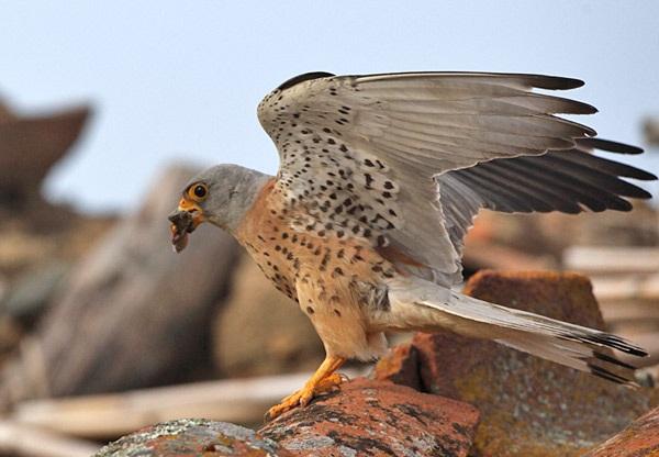 Πρόγραμμα προστασίας σπάνιων αποδημητικών πουλιών
