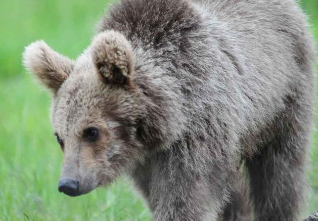 Αρκουδάκια κατέβηκαν από το βουνό για να κάνουν τραμπάλα στο κέντρο της Καστοριάς