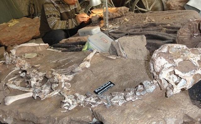 Σπουδαία ανακάλυψη: Βρέθηκε άρτιος σκελετός δεινοσαύρου 72 εκατ. ετών