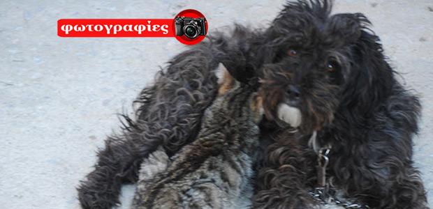 Σκόπελος: Σκυλίτσα ταΐζει γατάκι...