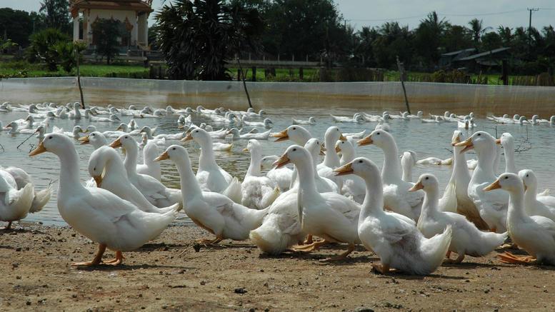 Συναγερμός την Ευρώπη από μπαράζ κρουσμάτων γρίπης των πτηνών