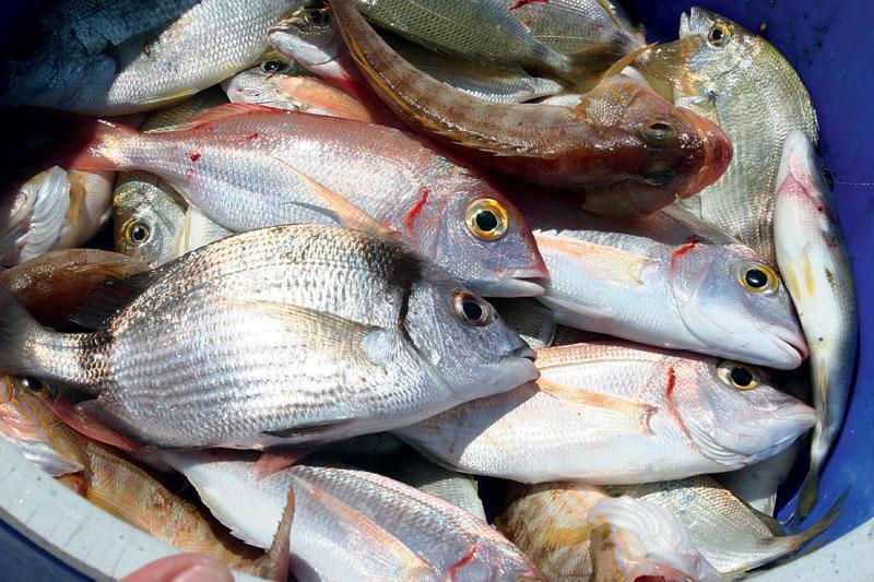 Θα πουλούσε 190 κιλά ψάρια χωρίς άδεια