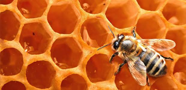 Βολιώτικο μέλι στο Ντουμπάϊ
