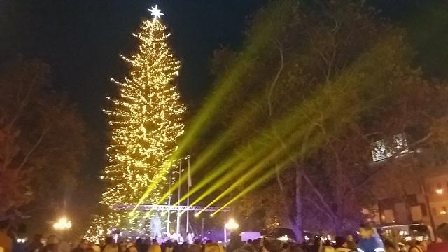 Φωταγωγήθηκε το υψηλότερο φυσικό χριστουγεννιάτικο δέντρο της χώρας