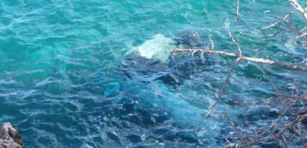Αμαλιάπολη: Το αυτοκίνητό τους έπεσε από γκρεμό 30μ. στη θάλασσα και σώθηκαν