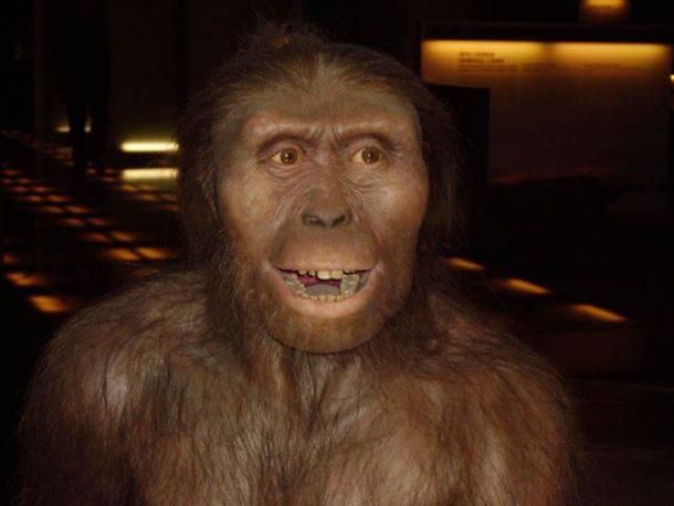 Φως στην αιτία θανάτου της Λούσι, μετά από... 3,18 εκατομμύρια χρόνια