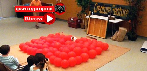 Σκύλος σπάει 100 μπαλόνια σε 39 δευτερόλεπτα