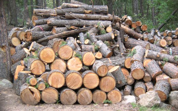 Ερμηνευτική εγκύκλιος για το βιβλίο απογραφής ξυλείας και προϊόντων ξυλείας