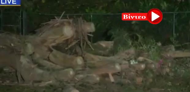 Ματωμένος γάμος: Μία νεκρή & 5 τραυματίες από πτώση δέντρου
