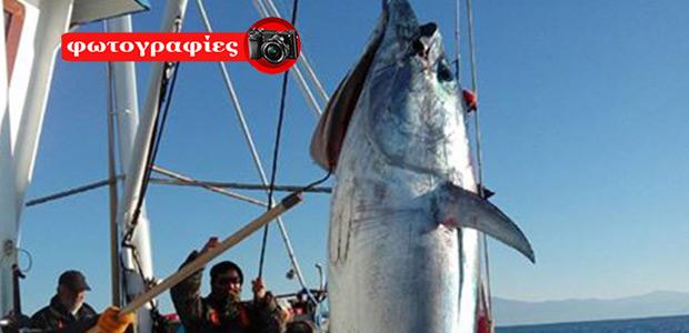 Ψαράδες στη Σκόπελο έβγαλαν Tόνο 185 κιλών!