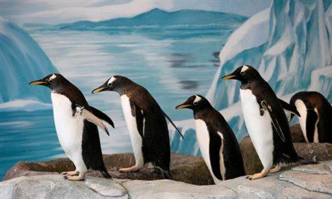 Για να μην γλιστράτε στον πάγο, περπατήστε όπως οι πιγκουίνοι