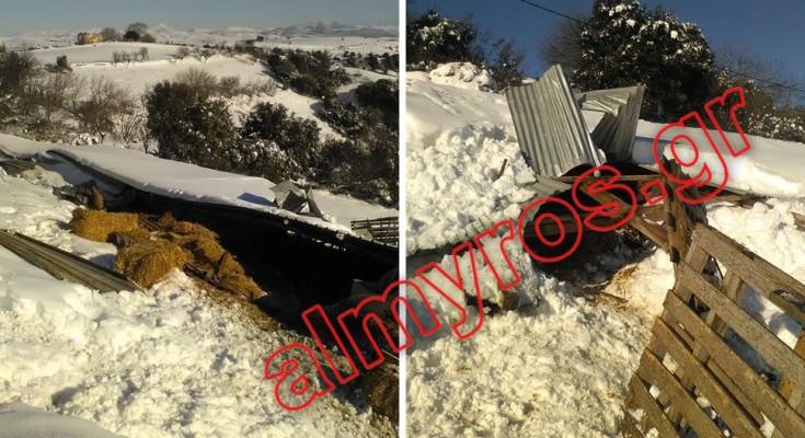 Κατέρρευσε ποιμνιοστάσιο στον Ανθότοπο Αλμυρού από το χιόνι