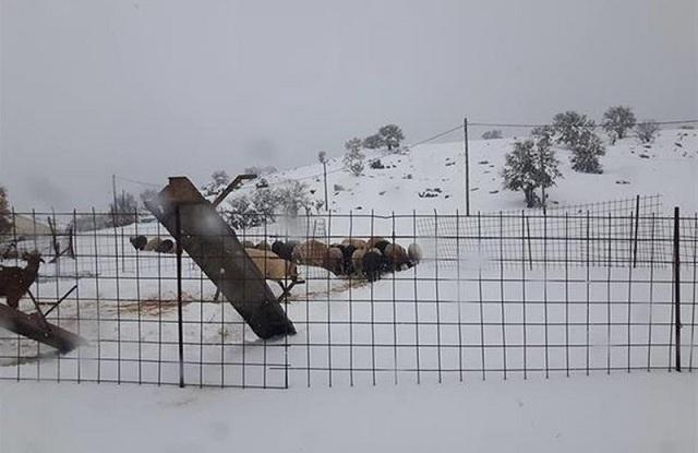 Δήμος Ρ. Φεραίου: Δεκάδες μονάδες κτηνοτρόφων αποκλεισμένες