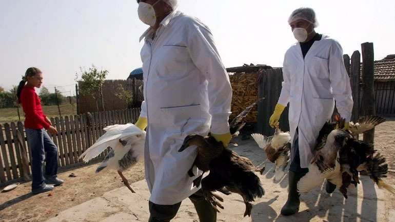 Ιταλία: Κρούσμα της γρίπης των πτηνών Η5Ν8 σε αγριόπαπια