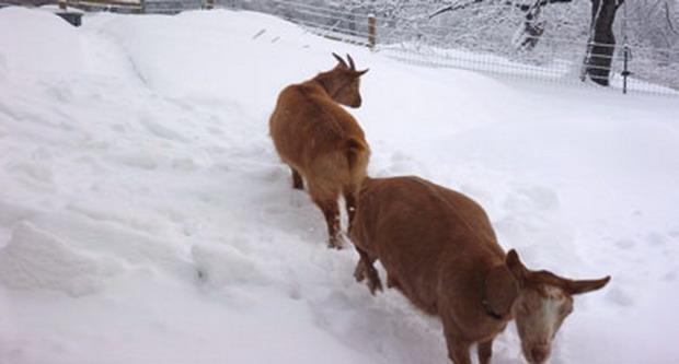 Απεγκλωβισμός 24 κτηνοτροφικών μονάδων στο Δήμο Ρ. Φεραίου