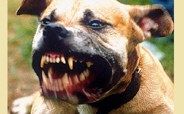 Ψάχνουν τα αίτια της φονικής επίθεσης σκύλου στον 30χρονο