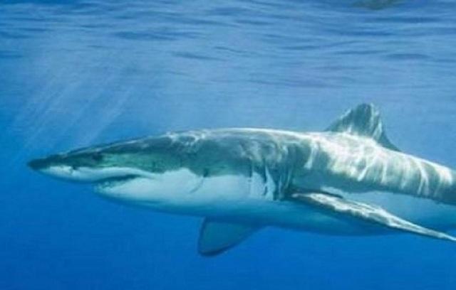 Oυσία από καρχαρία αφήνει υποσχέσεις στη μάχη κατά του Πάρκινσον